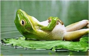 lejog-frog-on-lilly-leaf