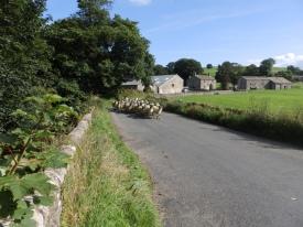 sheep-jam